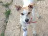 18.07.2014 r. Ruumba, mała suczka gotowa do adopcji. Czeka na dom.