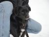 sami-maly-pies-adopcja-poznan-2