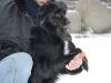 sami-maly-pies-adopcja-poznan-4
