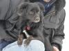 sami-maly-pies-adopcja-poznan-5