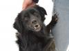 sami-maly-pies-adopcja-poznan-7