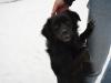 sami-maly-pies-adopcja-poznan-8