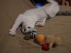 sniezka-kotka-do-adopcji-poznan-4