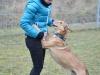 11.11.2015 r. Szczęśliwy Tango na wybiegu.