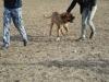 24.10.2015 Jesienna aura sprzyja zacieśnianiu więzi między przytuliskowymi psiakami. Dzisiaj Texas i Rea poszli na wspólny spacer, na którym mieli okazję lepiej się poznać.