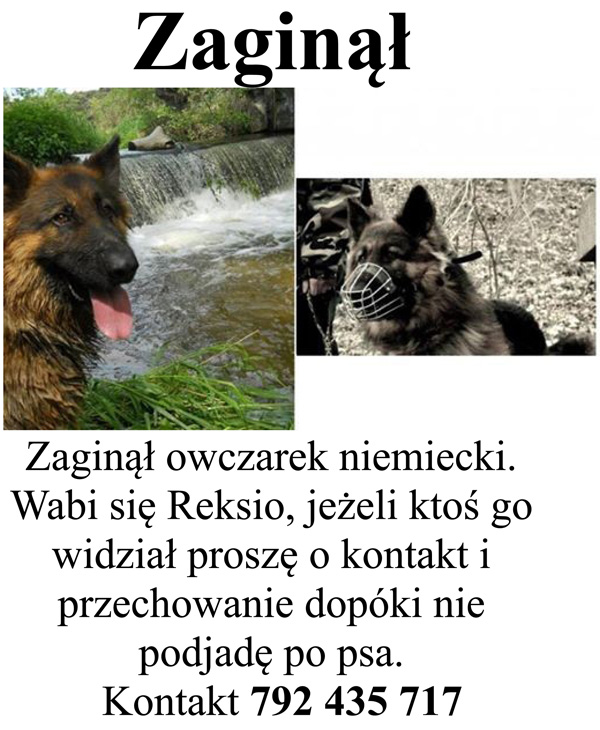 zaginalreksio