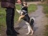 zibi-pies-do-adopcji-poznan-dopiewo-3