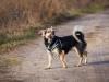 zibi-pies-do-adopcji-poznan-dopiewo-5