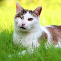 Thelma, kotka wychodząca do adopcji, Poznań