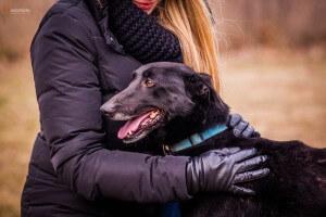 Szaki czarny pies do adopcji