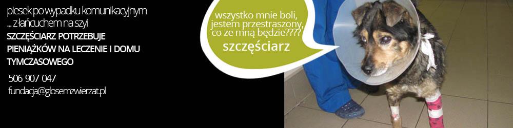 15_BaneSzczesiciarz