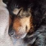12-03-2016 - teddy przypomina sie do adopcji
