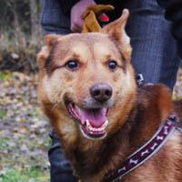 Maxim, pies do adopcji, Poznań, Dopiewo