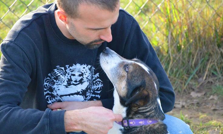 05-01-2016 Lassie suczka do adopcji Poznań