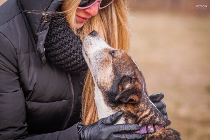Lassie suczka do adopcji Poznań