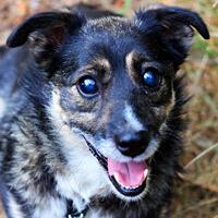 Billy niewidomy pies adocpja Poznań