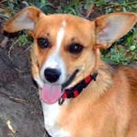 Merfi pies do adopcji Poznań