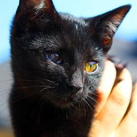 Luka czarna kotka do adopcji
