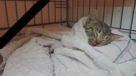 Kotek z wypadku odszedł za tęczowy most