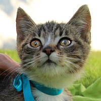 Krysia kotka do adopcji