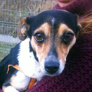 MEGI pies do adopcji Poznań