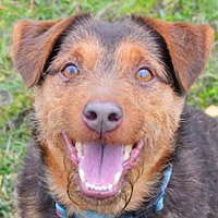 Misiu pies do adopcji Poznań