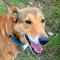 Tango pies do adopcji Poznań