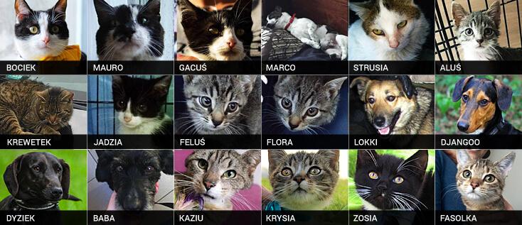 Telegram adopcyjny koty psy adopcja Poznań
