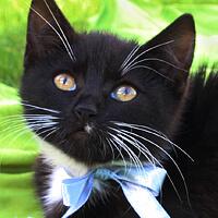 Zosia kotka do adopcji
