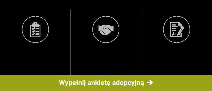 Adopcja w 3 krokach
