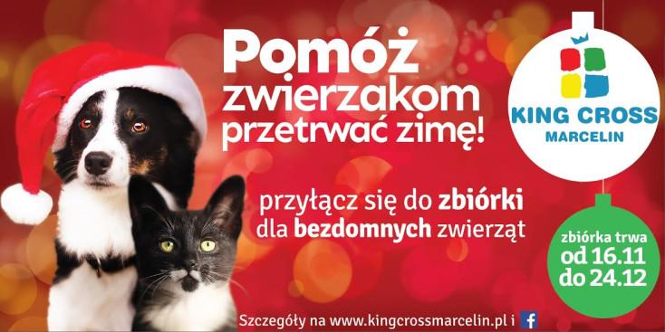 Pomóż zwierzakom przetrwać zimę! Przyłącz się do zbiórki dla bezdomnych zwierząt.