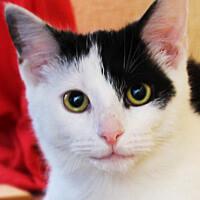 Zula kotka do adopcji Poznań