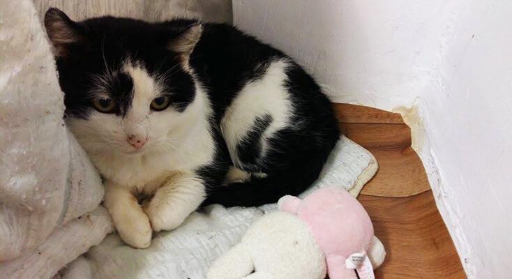 Billuś kot do adopcji Poznań