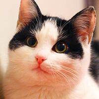 ZUZIA kotka do adopcji Poznań