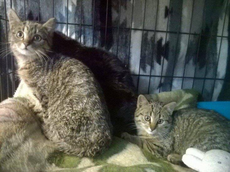 Trzy urocze maluchy czekają na dom tymczasowy