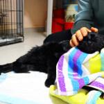 Potrzebna pomoc dla sparaliżowanego kota Bogdana
