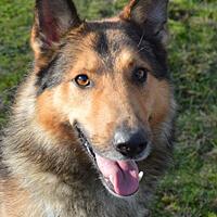 Argo pies do adopcji Poznań