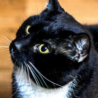 Filo kot do adopcji Poznań