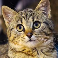 Jaśmina kotka do adopcji Poznań