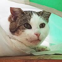 Lilu, kotka do adopcji, Poznań