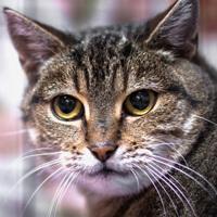 Rózia kotka do adopcji Poznań