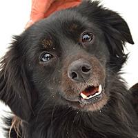 Sami mały czarny pies do adopcji Poznań