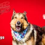 14-02-2016 - Walentynki pies Argo