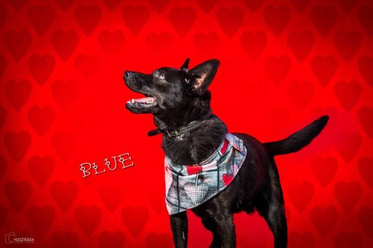 14-02-2016 - Walentynki Blue
