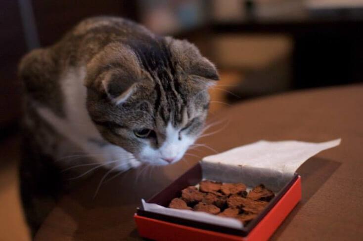 17-02-2016 - jednodniowa licytacja na dzien kota