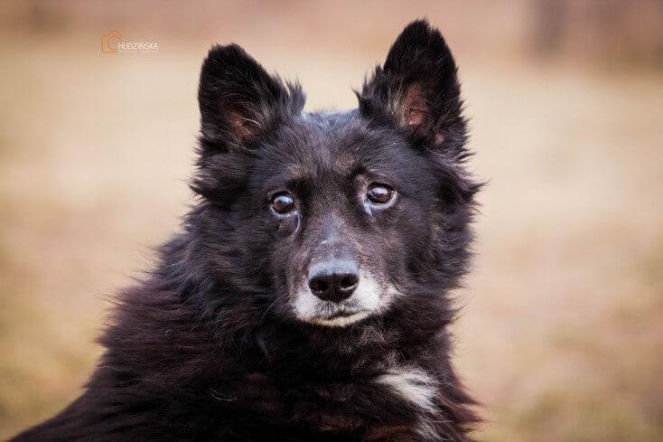 Lucjan starszy pies do adopcji Poznań