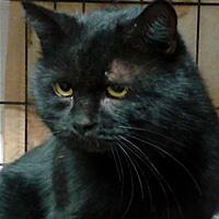 Borys czarny kot do adopcji Poznań