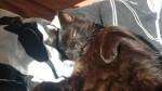 kot oli zostaje na stale w domu tymczasowym (3)