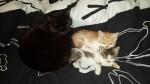 kot oli zostaje na stale w domu tymczasowym (4)