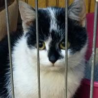 Pixi mała kotka do adopcji Poznań